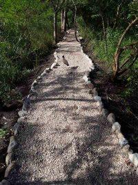 Umusambi Paths