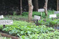 Umusambi Plant Garden