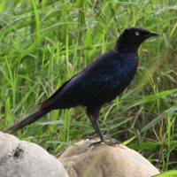 Umusambi Birding